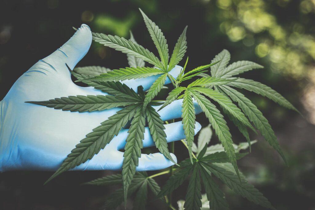 Corso di perfezionamento post laurea sulla cannabis sativa